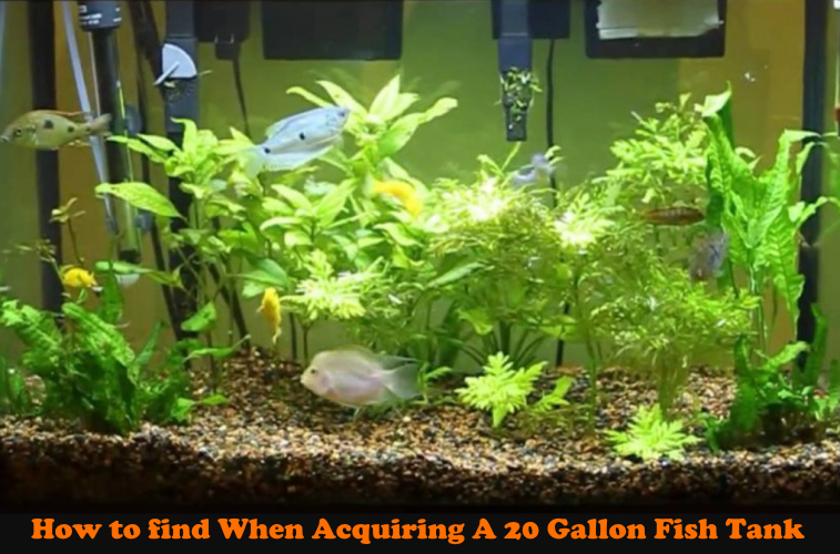 The Best Pool Filter Sands for Aquarium for 2020